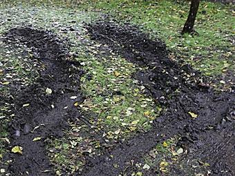 За парковку на газонах в марте оштрафовали 1414 москвичей