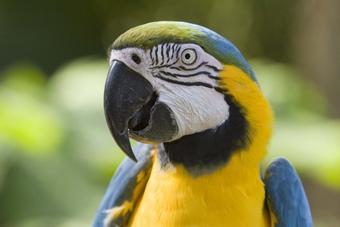 Попугая оштрафовали на 444 евро за неправильную парковку