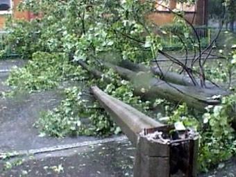 Из-за упавшего дерева закрыто движение по Рождественскому бульвару