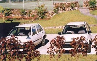 Белые автомобили - самые безопасные