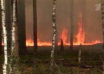 В подмосковные леса запретили въезд автотранспорта