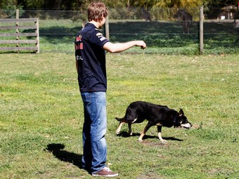 Собака остановила тренировку Формулы-1 в Индии