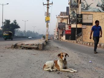 Индийскую трассу Формулы-1 защитили от собак