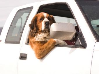 В США собака на автомобиле сбила человека