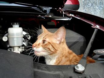 Конструкцию Lada Kalina попросили изменить ради кошек