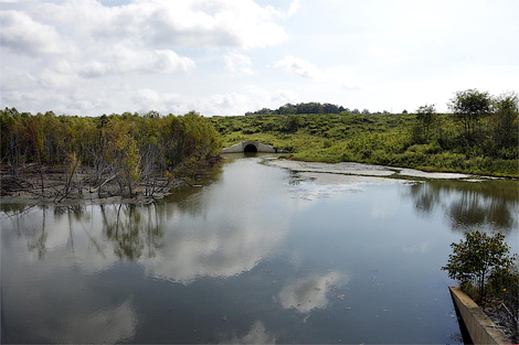 На территории завода Toyota оставили плотины бобров