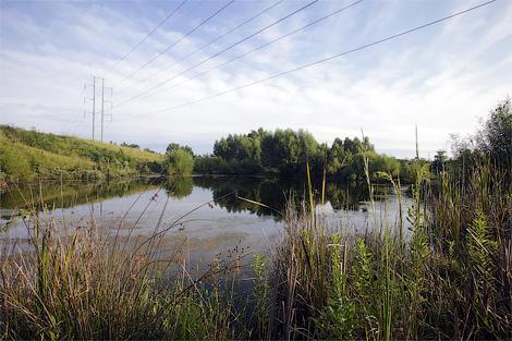 На территории завода Toyota оставили плотины бобров. Фото 1
