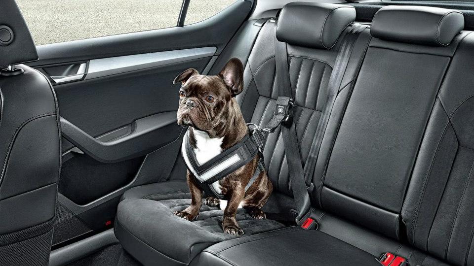 Skoda выпустила ремни безопасности для собак
