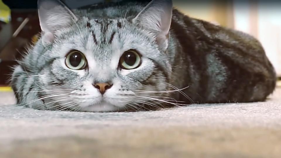 «Ниссан» напомнил водителям о кошках под капотом
