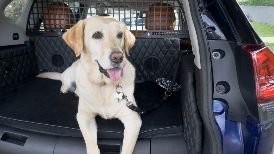 Ниссан подготовила еще один райский уголок для собак